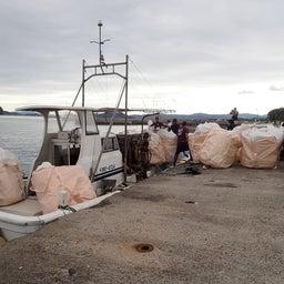 画像 牛深の漁師さんたちの環境保全協議会による海ゴミ回収~ の記事より 11つ目