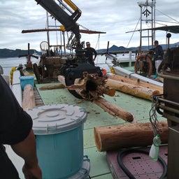 画像 牛深の漁師さんたちの環境保全協議会による海ゴミ回収~ の記事より 14つ目
