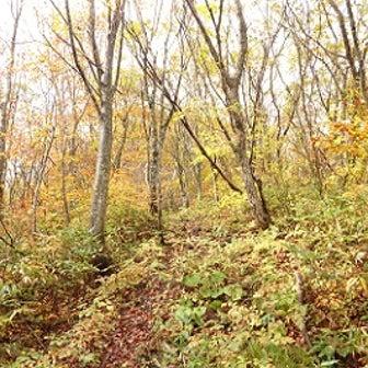 黄葉と岩道の泉ヶ岳・表コース