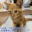 【拡散希望】子猫のトロ君、入院しました