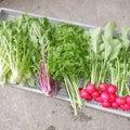 おでん大根の初採り、新鮮な野菜便~♪