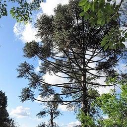 画像 先週末の山の家の帰りにNOVA PETROPOLISの街の公園に立ち寄りました。 の記事より 4つ目
