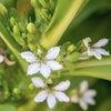 ハワイ伝説の花の力で「引き寄せ」したいですね❣️の画像