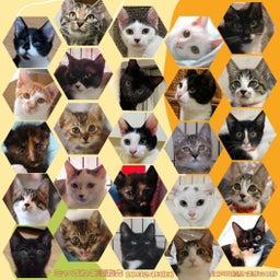 画像 ▶明日10/24(日)江戸川橋で猫譲渡会 の記事より 1つ目