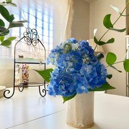 画像 紫陽花の花1本で部屋のエネルギーが変わる の記事より 1つ目