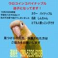 Happy Bird 山口県宇部市にある小鳥専門店