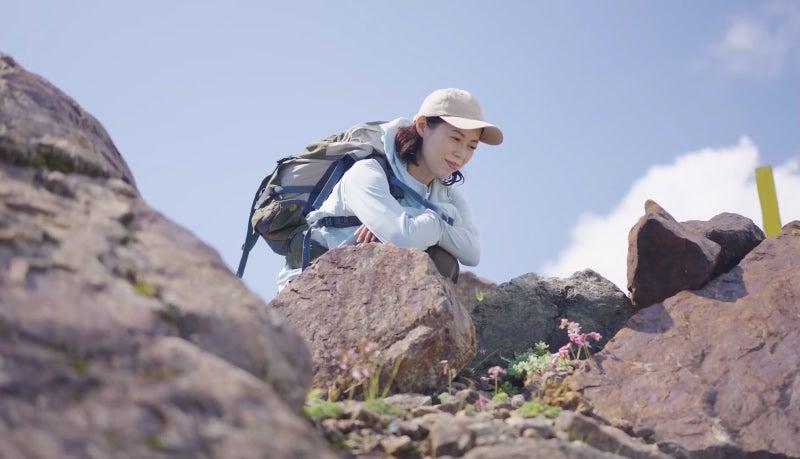 高嶺の花 高山植物 高山の女王 コマクサ