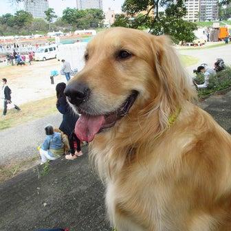 【ワンコ記事】誕生日に「犬市場in OKAZAKI 2021 Autumn」へ 2021年岡崎市
