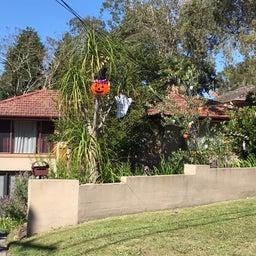 画像 シドニーで見つけたハウスハロウィンデコレーション! の記事より 7つ目