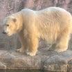 八木山動物園に行ってきました@店長の休日