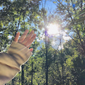 シシ神様の森に生きる
