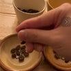 コーヒー豆のソラシ❣️