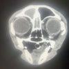 ふぐおの検査結果や今日の手術のことの画像