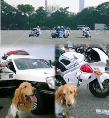 なにやら警察車両が多いけど、、、エッ なぁに??