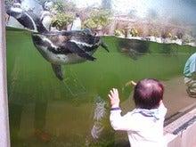 夢見ヶ崎ペンギンと遭遇