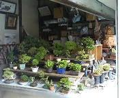 物凄い数の盆栽たち。