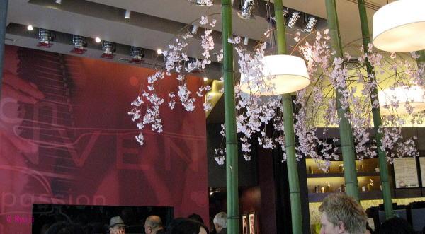 スターバックス 桜