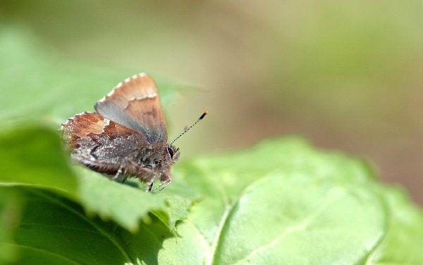 昆虫撮影記