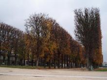 リュクサンブール公園の並木