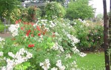 高崎高校花壇