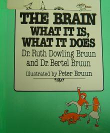 bruun the brain what it is what it does