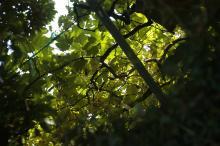 初秋の三ヶ日ぶどう園