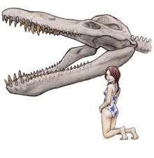 クロノサウルスの頭骨