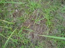 クマの足跡?