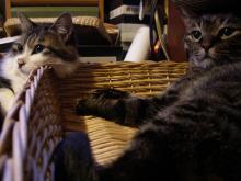 猫紙芝居1