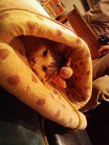 コトラ寝袋in