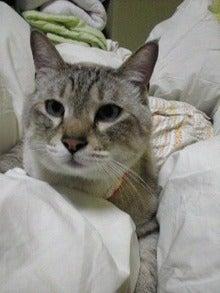 きょうの淡雪さん。 ~膀胱麻痺ネコ奮闘中!!~-Image0541.jpg