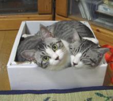 melodyのブログ-猫詰め合わせ