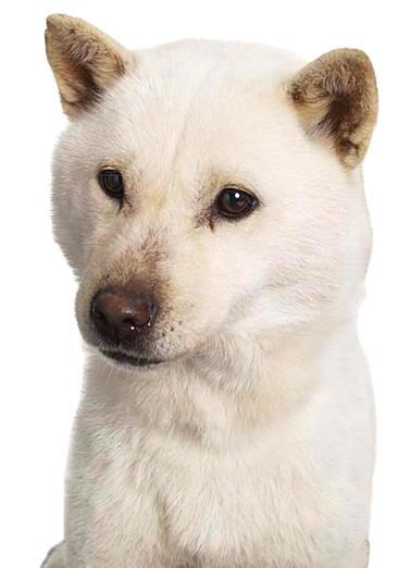 softbank 犬