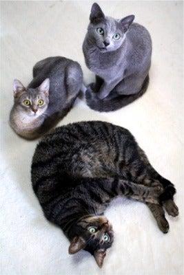 すみれ色の猫たち-fuuhanasora2