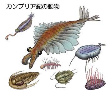 カンブリア紀の動物