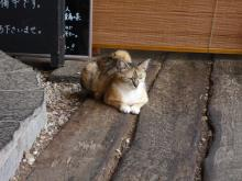 Chabou's_猫