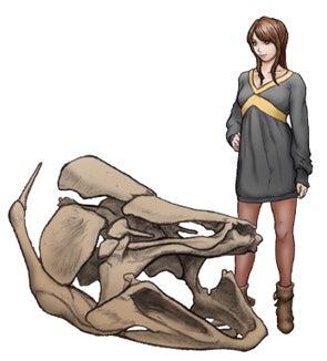 マウソニアの頭骨