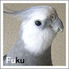 ふく(1999年4/11・お迎え)