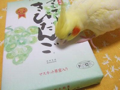 たんぽぽ012407