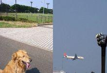 飛行機が近い!(^^)! 次から次と面白~い^^;