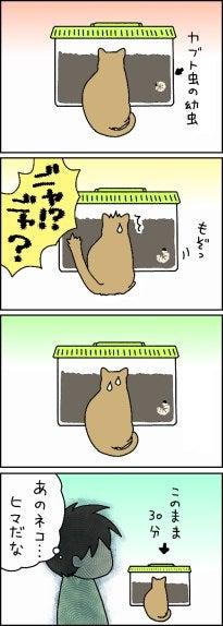 見張りネコ