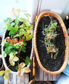 秋の植え替え後