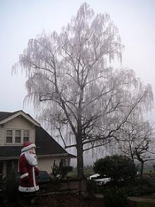 ファームの家と巨大サンタと霧氷の大木