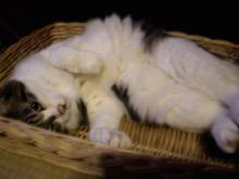 猫紙芝居7