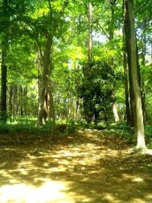 八木が谷北市民の森2