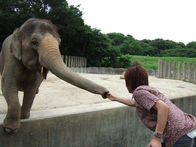 象にエサあげるコーナー