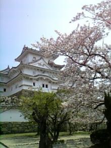 桜と姫路城