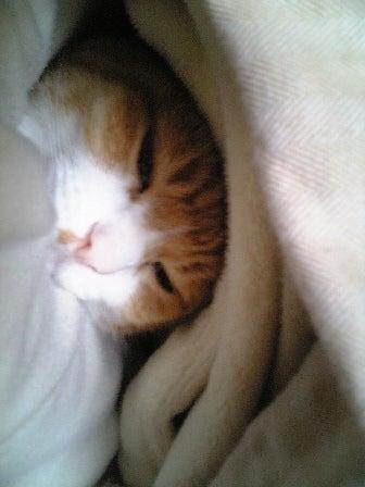 おやすみちゅう