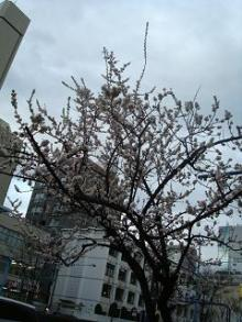びびん☆こゆっきー ときどき音楽-春