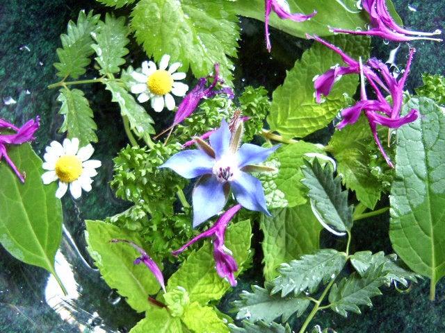 花や葉と水。
